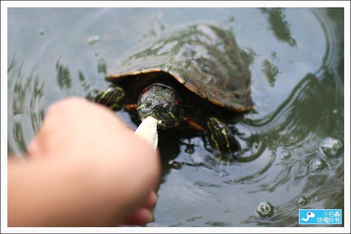 怎么喂乌龟